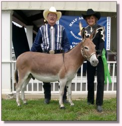 My World Digger winning 6th out of 19 entries at The Great American Mule & Donkey Show in Shelbyville, Tennessee 2004!!!