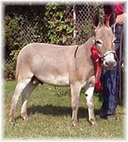 Miniature Donkey My World Dodger (7248 bytes)