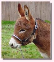 Miniature Donkey My World Tyler (aka Squeak - 7130 bytes)