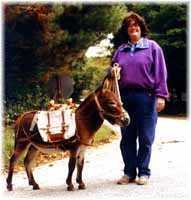 Miniature Donkey My World Victor (7082 bytes)